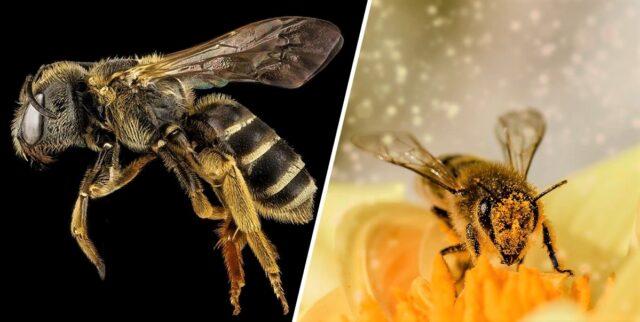 Пчелата е обявена за най-важното живо същество на планетата