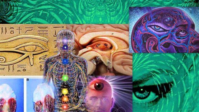 Епифизата е вход към други измерения